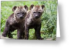 Spotted Hyena Cubs I Greeting Card