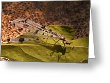 Spotted Mayfly Greeting Card