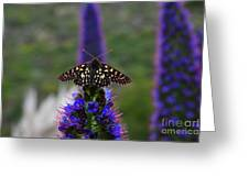 Spotted Moth On Purple Flowers Greeting Card
