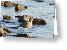Spotted Sandpiper Keeping Sentry On The Bay Greeting Card