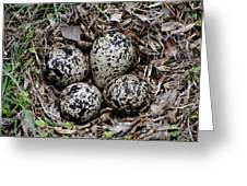 Spotted Sandpiper Nest Greeting Card