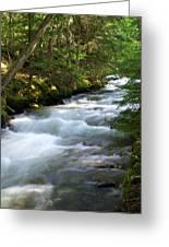 Sprague Creek Glacier National Park 2 Greeting Card