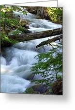 Sprague Creek Glacier National Park Greeting Card