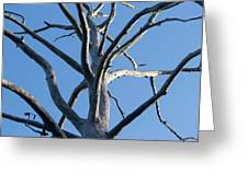 Sprawling Dead Tree Greeting Card