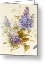 Spray Of Lilac Greeting Card