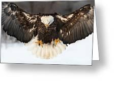 Spread Eagle Greeting Card
