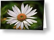 Spread Your Petals Greeting Card