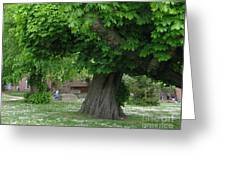 Spreading Chestnut Tree Greeting Card
