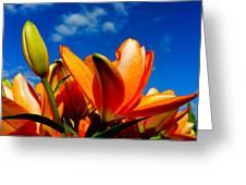 Spring 2015-pic21 Greeting Card