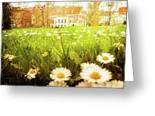 Spring. A Medow Spread With Daisies In Baden-baden, Germany Greeting Card