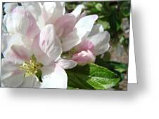 Spring Apple Blossoms Art Prints Apple Tree Baslee Troutman Greeting Card
