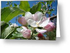 Spring Apple Blossoms Pink White Apple Trees Baslee Troutman Greeting Card