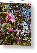 Spring Apple Blossoms- Spring Flowers Greeting Card