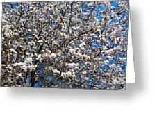 Spring As Rhapsody Greeting Card
