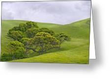 Spring At Del Valle Greeting Card