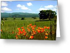Spring At Gainey Ranch Greeting Card