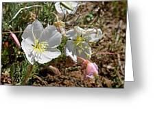 Spring At Last Greeting Card