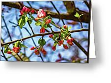 Spring Awakening 3 - Paint Greeting Card