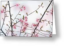 Spring Awakening Greeting Card by Eena Bo