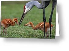 Spring Babies  Greeting Card