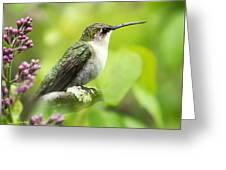 Spring Beauty Hummingbird Square Greeting Card