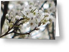 Spring Beauty Greeting Card
