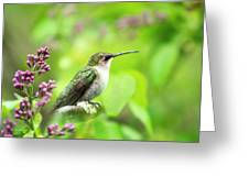 Spring Beauty Ruby Throat Hummingbird Greeting Card by Christina Rollo