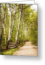 Spring Birches Woods Footpath Greeting Card