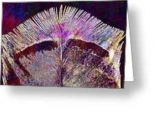 Spring Bird Feather Turkey Feather  Greeting Card