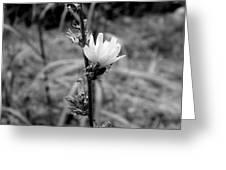 Monochrome Flower Series - Spring Bloom Greeting Card