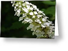 Spring Bloomers 2 Greeting Card
