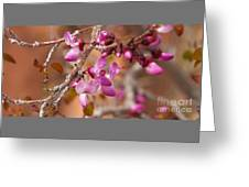 Spring Blooms In Nevada Greeting Card