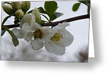 Spring Blooms In White Greeting Card