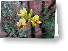 Spring Blooms Yellow Red 052814a Greeting Card