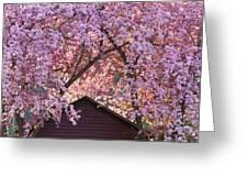 Spring Blossom Canopy Greeting Card