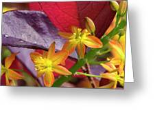 Spring Blossoms 2 Greeting Card