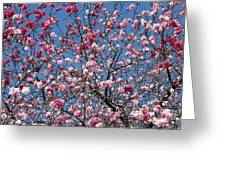 Spring Blossoms Against Blue Sky Greeting Card