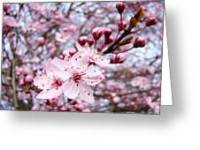 Spring Blossoms Art  Pink Tree Blossom Baslee Troutman Greeting Card