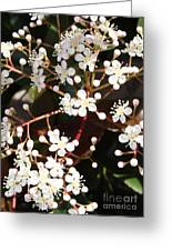 Spring Blossoms Macro Greeting Card