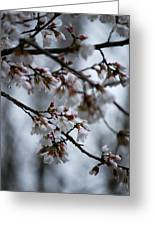 Spring Blosssoms Greeting Card