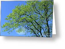 Spring Blue And Green Greeting Card