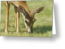 Spring Buck Greeting Card