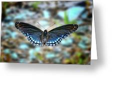 White Admiral Or Red-spotted Purple Greeting Card