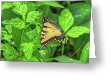 Spring Butterfly Greeting Card