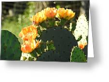 Spring Cactus 14 Greeting Card