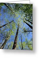 Spring Canopy Skylight Greeting Card
