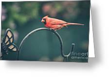 Spring Cardinal Greeting Card