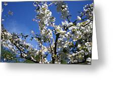 Spring Cherry Blossoms Greeting Card
