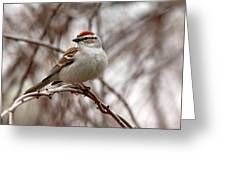 Spring Chipping Sparrow Greeting Card