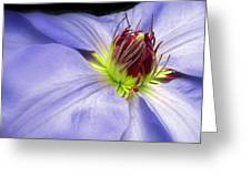 Spring Clematis Greeting Card